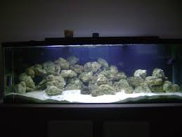 Aquarium Decor Ideas Decor How To Decorate Aquarium Decoration Ideas Cheap Marvelous