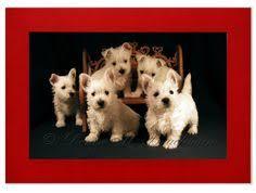 westie puppies photo greeting card blank by denisebruchman