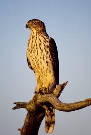 nj audubon ebird
