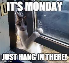 Hang In There Meme - image tagged in hang in there imgflip