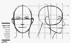 drawings parts of the head