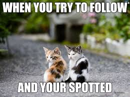 Hd Memes - image tagged in memes hd high definition hd meme cats imgflip