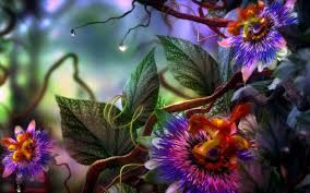 Beatiful Wallpaper Beautiful Flower Pictures Wallpapers 35 Wallpapers U2013 Adorable