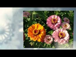 send flowers internationally send flowers internationally order send flowers world