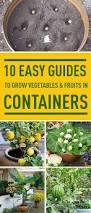 Indoor Vegetable Container Gardening - best 25 growing vegetables indoors ideas on pinterest growing