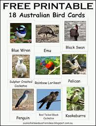 suzie u0027s home education ideas hands on learning about australian birds