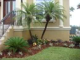 Landscaping Ideas For Florida by Palm Tree Landscape Design Ideas Modern For Small Front Yards