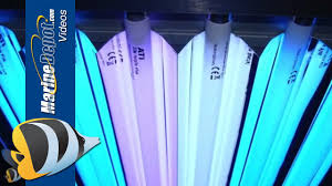 T5 Ho Bulbs Home Depot by T5ho Fluorescent Proven Lighting For Your Reef Aquarium Youtube