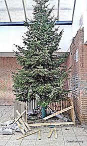Christmas Tree Collection Edinburgh Council