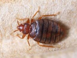 how much does a bed bug exterminator cost