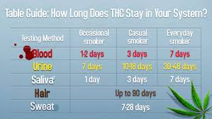 drug detection time table here s how long weed and edibles stay in your system chart
