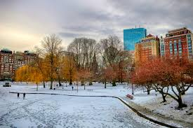 Zoo Lights Boston by 10 Things To Do In Boston In The Winter Discover Vacasa