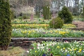 free stock photo of flowers in terraces in duke university in