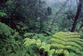 native plants and animals native forestes strawberry guava biocontrol research topics