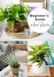 Easy Care Indoor Plants Best 25 Low Maintenance Indoor Plants Ideas On Pinterest Low