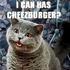 I Can Has Cheezburger Meme - lolcat i can haz cheezburger animal people abc radio national