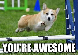 You Are Awesome Meme - you re awesome ridiculously photogenic dog quickmeme