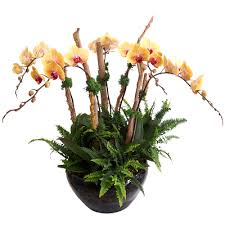 orchid delivery po 31 phalaenopsis orchid littleflowerhut co