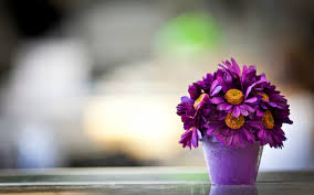 Table Flowers by Beautiful Purple Daisy Flower Pot Macro Photography Flowers