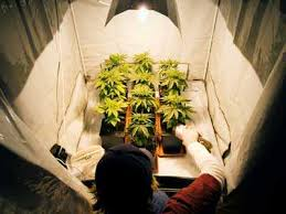 Light Cycle For Weed How To Grow Weed Indoors U2013 The Definitive Guide