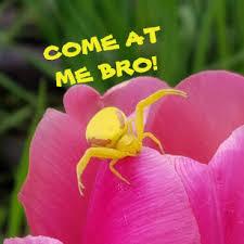 Spider Bro Meme - custom spider badges pins zazzle co uk
