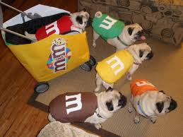 diy pet halloween costume ideas hgtv u0027s decorating u0026 design blog