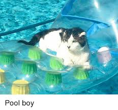 Pool Boy Meme - pool boy meme on me me