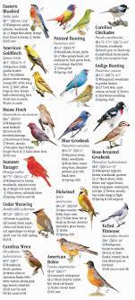 Oklahoma Birds images Birds of oklahoma quick reference publishing jpg