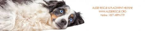 australian shepherd kidney disease arph in the northeast and mid atlantic areas we rescue and adopt