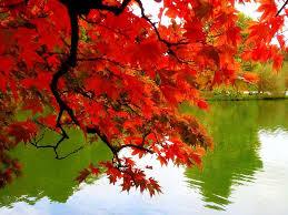 branson show peak fall foliage viewing information branson mo