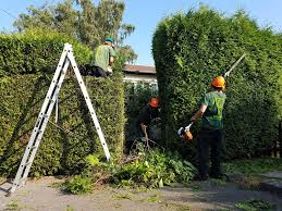 hedge trimming and maintenance furlonger tree services