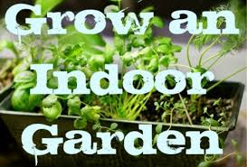 Easy Herbs To Grow Inside My Apartment Garden How To Grow An Indoor Herb Or Vegetable