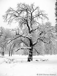 snow on tree branches by steven stewart black white magazine