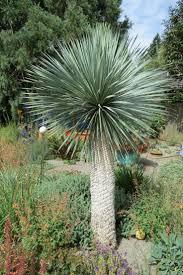 the most poisonous plants in australia hipages com au 10 best plant u0027s images on pinterest tropical plants aloha