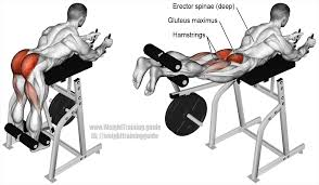 Lower Back Pain Bench Press Machine Reverse Hyperextension Usually Just Known As The Reverse