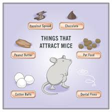how to get rid of mice in 5 easy steps mouse u0026 rat control