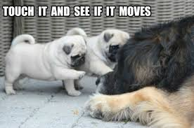 Sad Pug Meme - the sad truth about resolutions page 13 of 18 pug meme funny