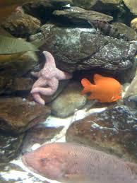Starfish Meme - the world s most interesting starfish imgur