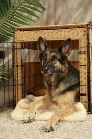Home Decor Distributors U S A by The Lowdown On Dog Beds Including Super Cool Designs