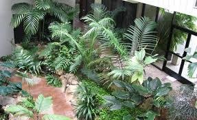 plant indoor plants low light enrapture indoor plants low light