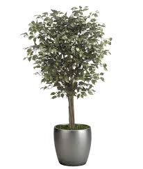 indoor decorative trees for the home the complete guide of replica botanicals preserved foliage and