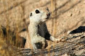photos and information about different rodents that are found in