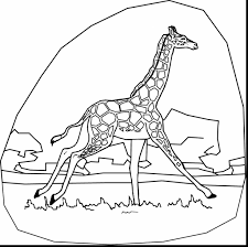 spectacular giraffe coloring pages printable with giraffe coloring