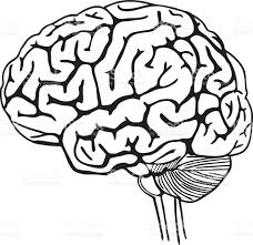 brain anatomy coloring book vector outline illustration of human brain stock vector art