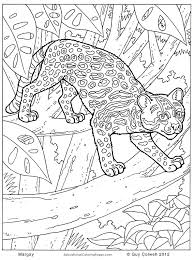 jungle animals colouring pages animal coloring pages kids