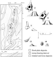Big Bend Map A Fossil Dicotyledonous Woodland Forest From The Upper Cretaceous