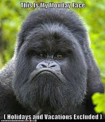 Funny Gorilla Memes - animal capshunz gorilla page 5 funny animal pictures with