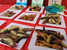 insecte cuisine manger des insectes en c est interdit sur le papier mais toléré
