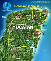 Map Of Tulum Mexico by Osprey Tours Mexico Birds Wachingbirds Siankaan Biospher Biosfera Monkey Yucatan Circuit Photo Jpg