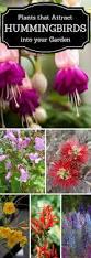 top 10 pretty plants that attract hummingbirds hummingbird